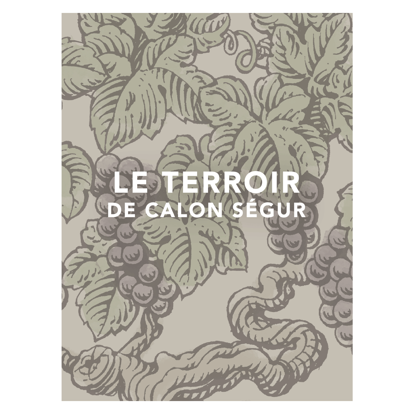La coupe du terroir