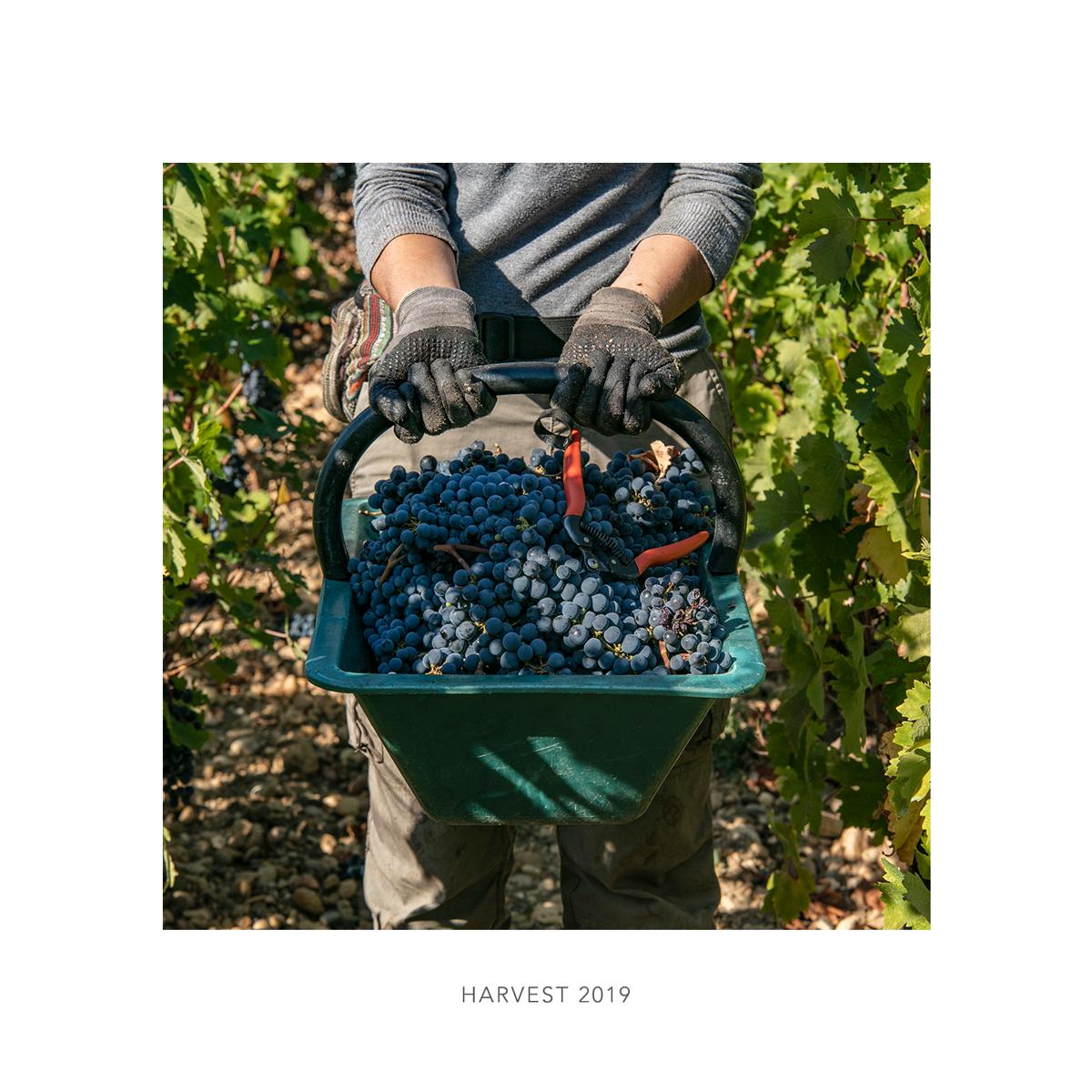 Harvest extract